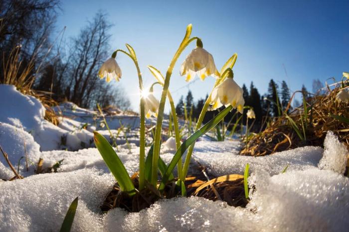 Природа оживает: рассказ о весне детям